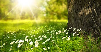 Sonne strahlt auf Blumenweise